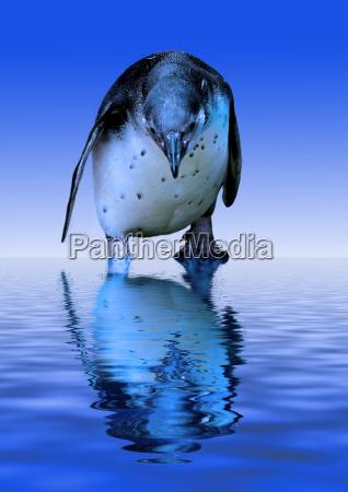arctic pinguin