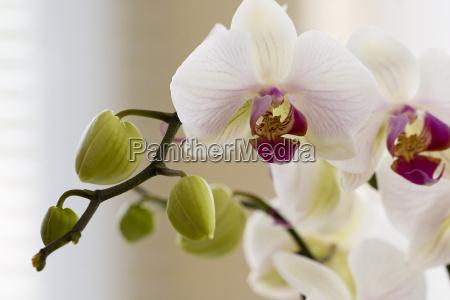 orchidee - 296646