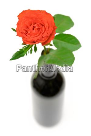 rose in einer weinflasche