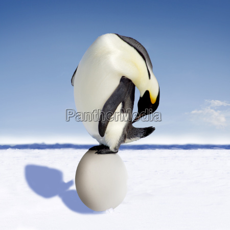 penguin egg