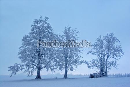 mystische winterlandschaft