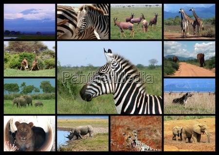 safari erinnerungen