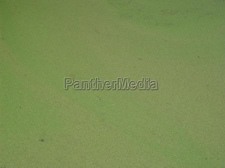 algen weiher 02
