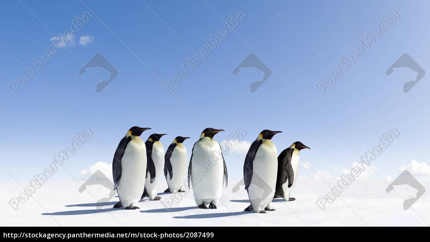 penguins - 2087499
