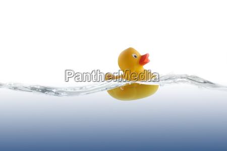 cute rubber duckling auf einer welle