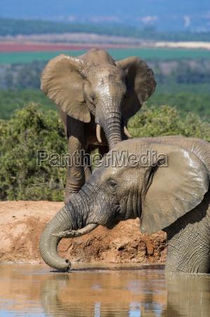 elephant fun