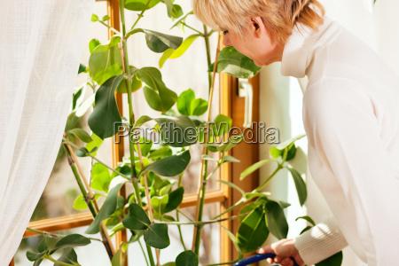 frau giesst ihre zimmerpflanzen