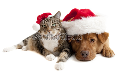 cat and dog with santas claus