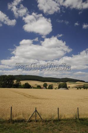 getreidefelder bei einbeck