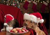 cat and dog eating santa039 snack