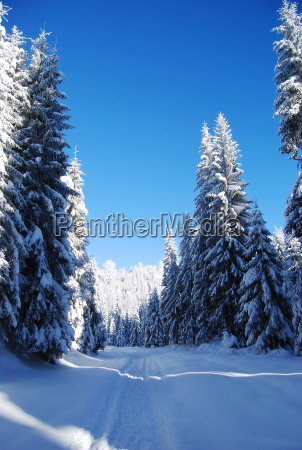 verschneiten, bergwald - 5017617
