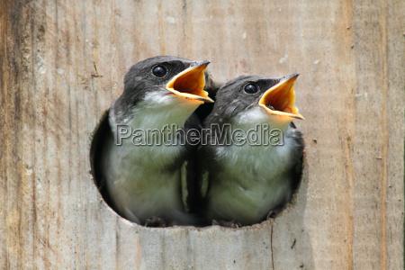 baby voegel in einem vogelhaus