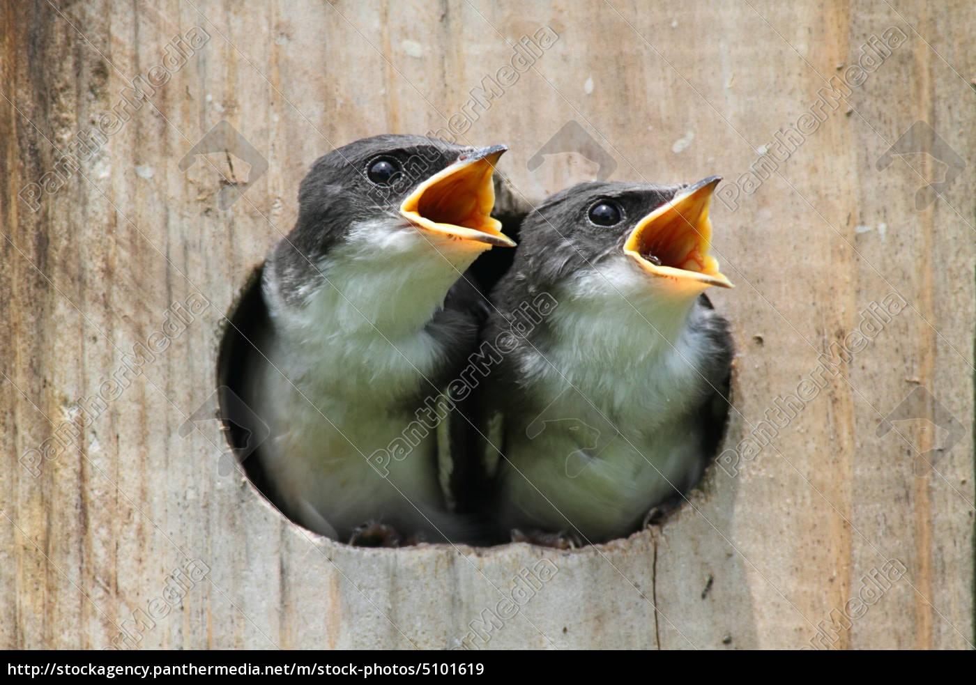 baby v gel in einem vogelhaus lizenzfreies bild. Black Bedroom Furniture Sets. Home Design Ideas