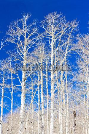 winter trees utah usa