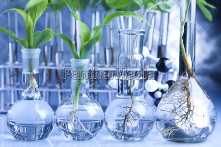 das experimentieren mit flora im labor