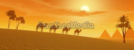 kamele in der wueste