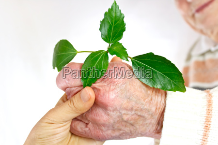 senior and young hands holding green
