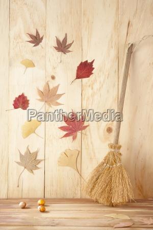 stilleben blatt baumblatt baum holz botanik