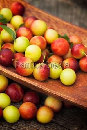fresh wild plum