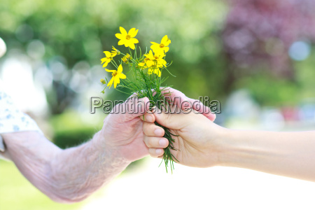 giving yellow flowers to senior woman