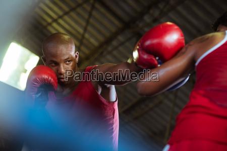 zwei maennliche athleten kaempfen in boxring