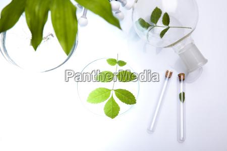 laborglas, pflanzen, im, labor, enthält - 7612568