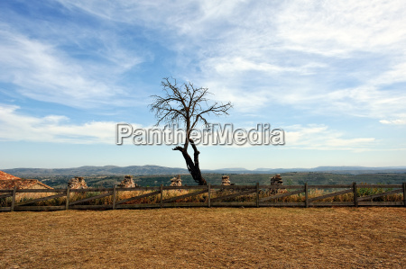 landscape with dry tree with mountain
