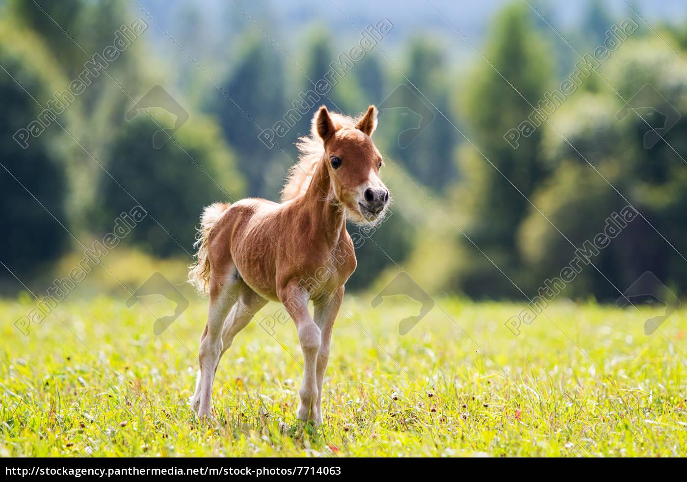 natur wasser sommer tier see pferd frei sommerlich lizenzfreies bild 7714063 bildagentur. Black Bedroom Furniture Sets. Home Design Ideas