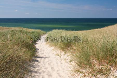 weg zum strand durch duenen auf
