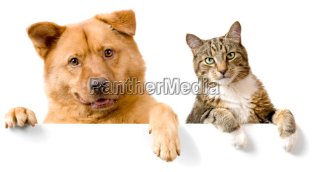 dog and cat above white banner