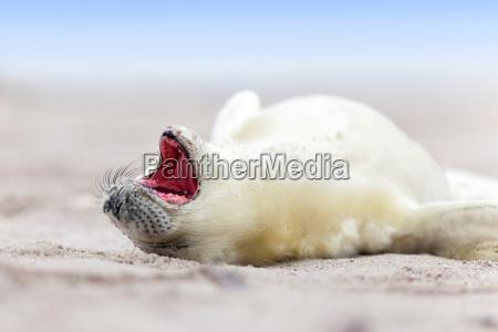 kleines robbembaby am strand