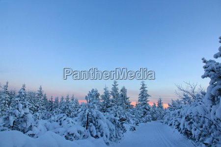 winter winterlandschaft schnee landschaft natur wald