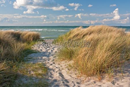 weg durch duenen am strand der