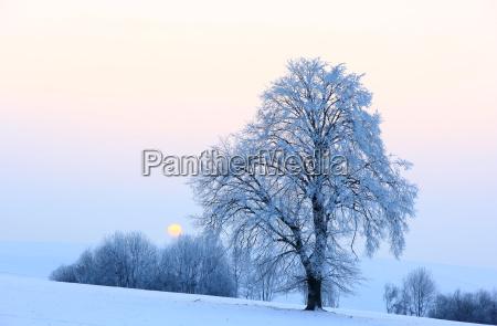 baum winter sonnenuntergang abend abendrot winterlandschaft