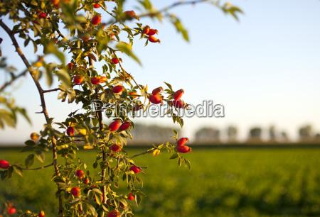 blume blumen pflanze straeucher buesche buschwerk