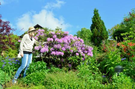 frau im garten mit rhododendron