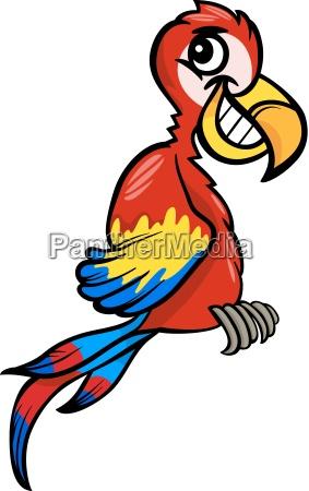 macaw clip art cartoon illustration
