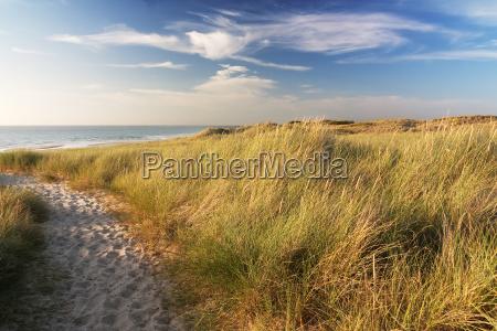 duenen am strand von sylt