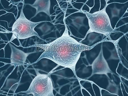 neuron konzept