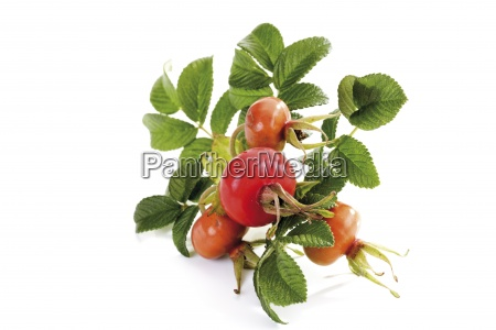 stilleben essen nahrungsmittel lebensmittel nahrung blatt