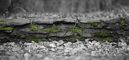stein mauer bewoelkt wolkig moos betagt