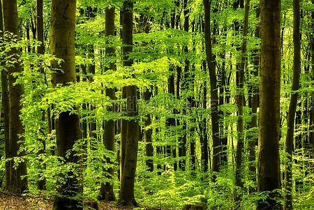 frisches gruen im laubwald
