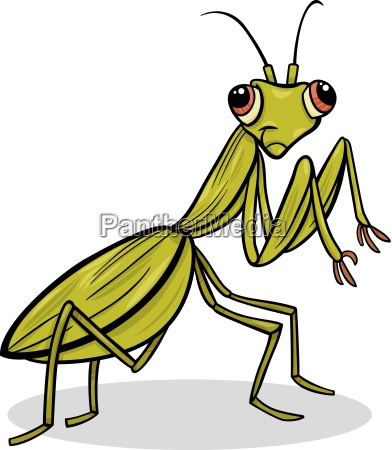 mantis insect cartoon illustration