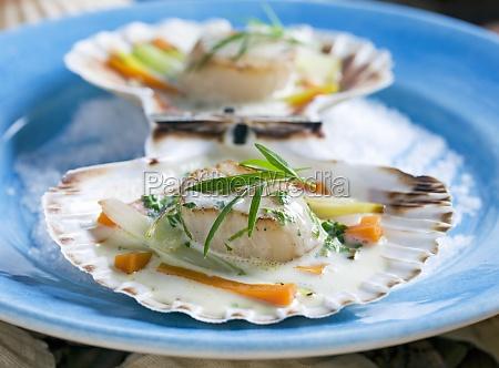 food aliment mollusc shell series kitchen