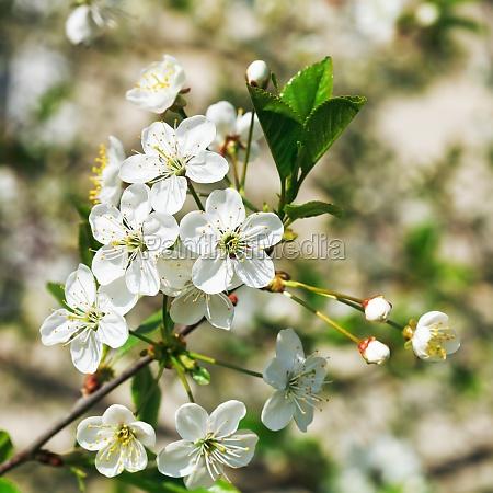 closeup baum garten blume pflanze gewaechs