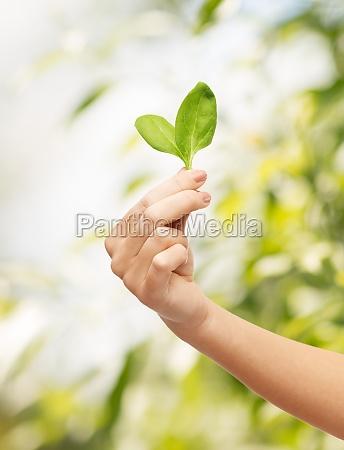 frau hand mit gruenen spross