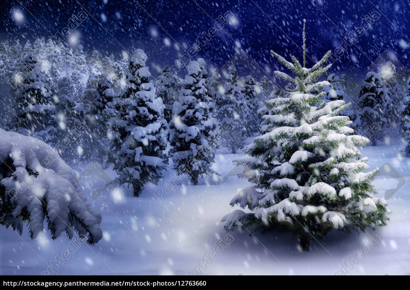 tannenbaum in verschneiter nacht lizenzfreies foto. Black Bedroom Furniture Sets. Home Design Ideas