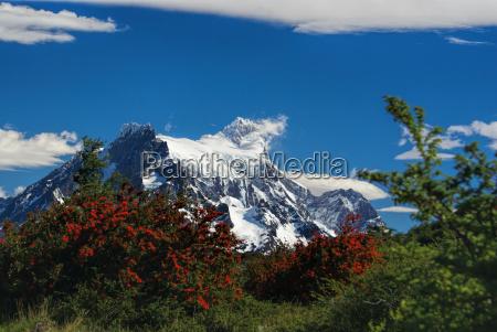 closeup baum baeume berge nationalpark blume