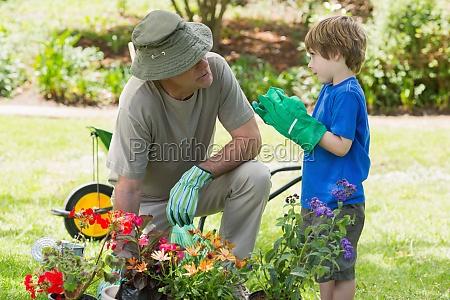 großvater, und, enkel, beschäftigt, im, gartenbau - 12810368