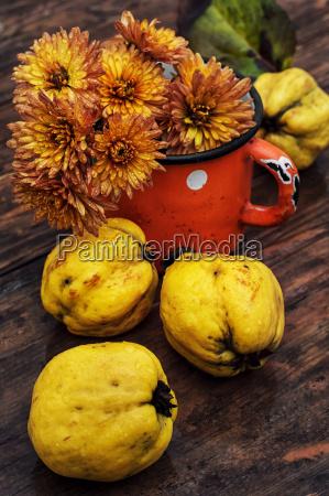 saftigereife frucht quitte auf holzplatte